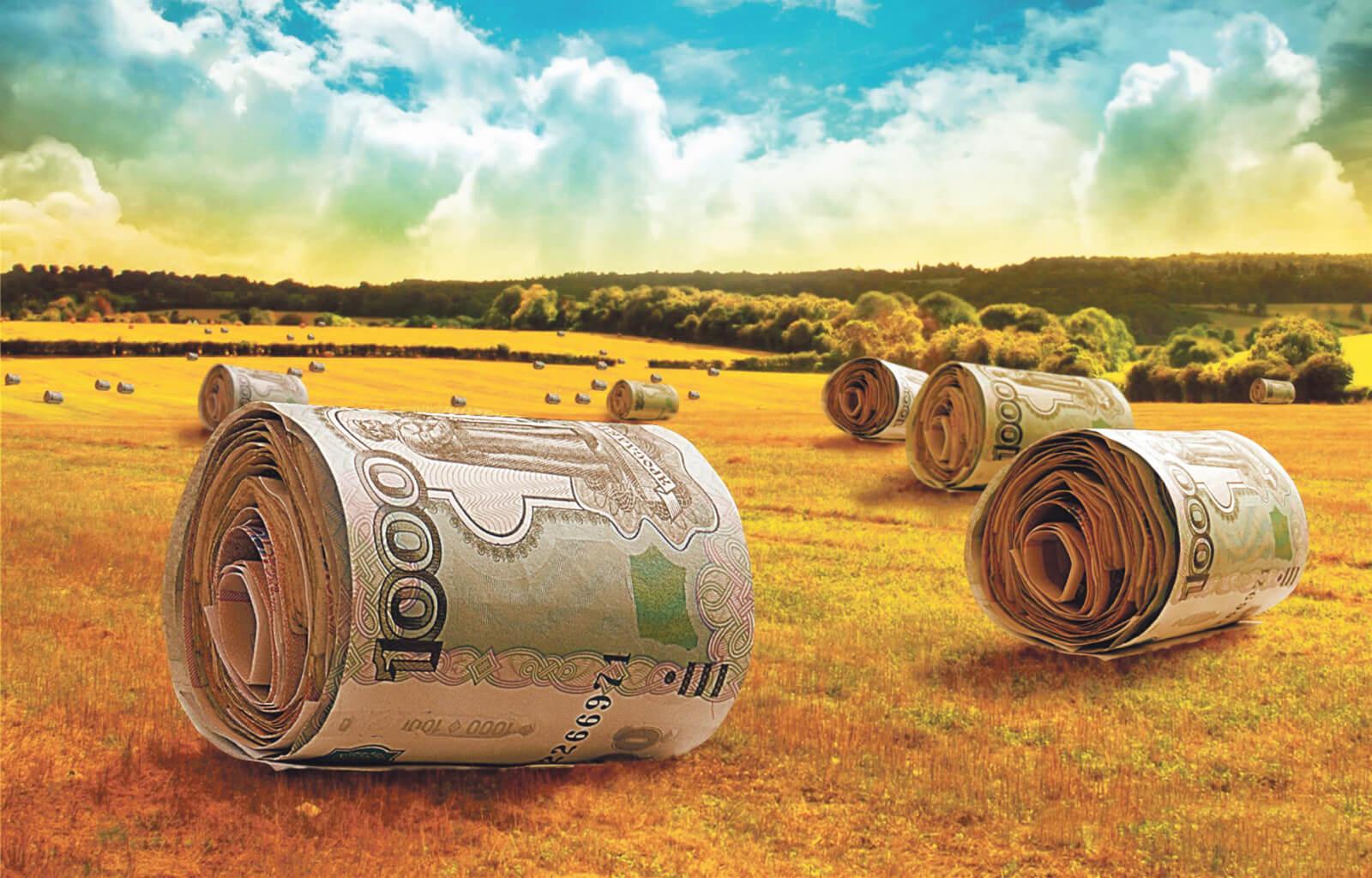 Как получить субсидии на сельское хозяйство:условия и порядок оформления